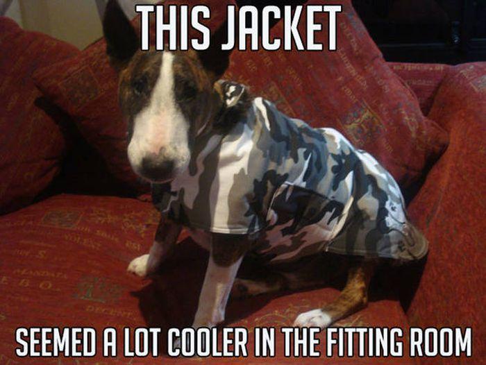 Sometimes Animals Make The Best Memes