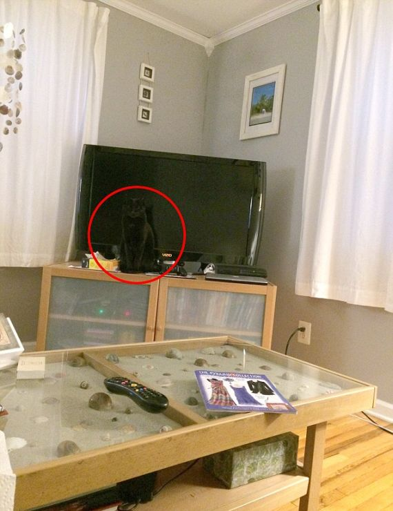 This Cat Is Now A Hide And Seek Champion