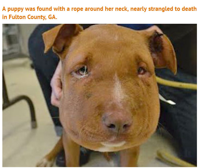 Someone Did Something Terrible To This Puppy, Luckily She Survived