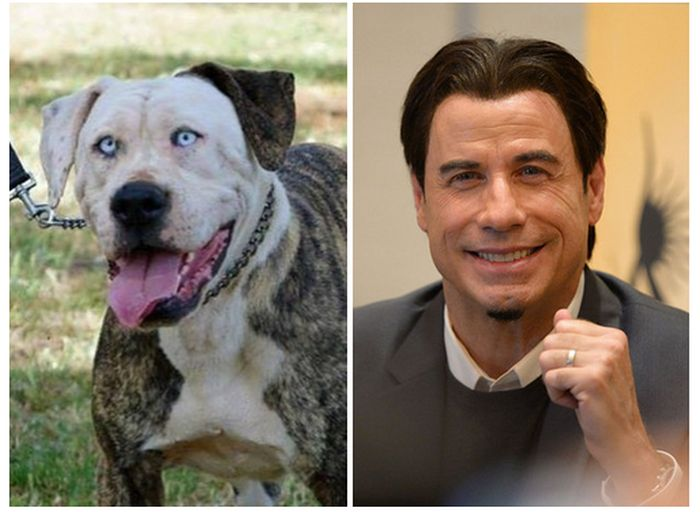 This Dog Looks Way Too Much Like John Travolta