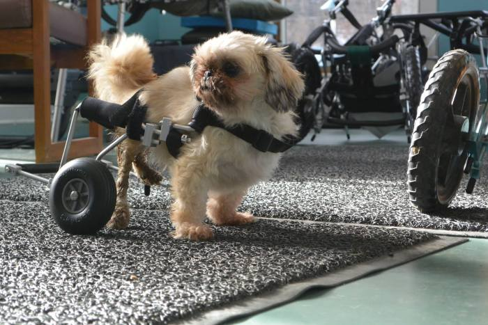 These Dogs In Wheelchairs Are The Cutest Thing You'll See Today