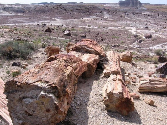 Welcome To The Petrified Forest