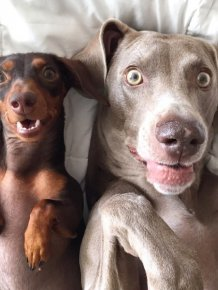 Harlow And Indiana Add A New Puppy To Their Doggie Duo