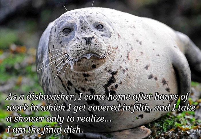 Funny Quotes Over Pictures Of Drooling Animals