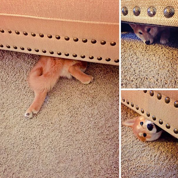 These Dogs Are Terrible At Hide And Seek