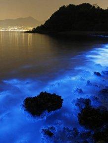 Bioluminescent Plankton On The Shores Of Hong Kong