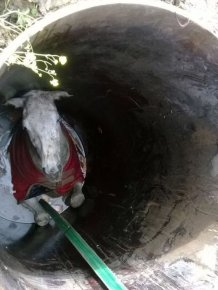 Stuck Horse Gets Rescued From A Well