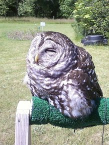 It Looks Like This Owl Melted In Direct Sunlight