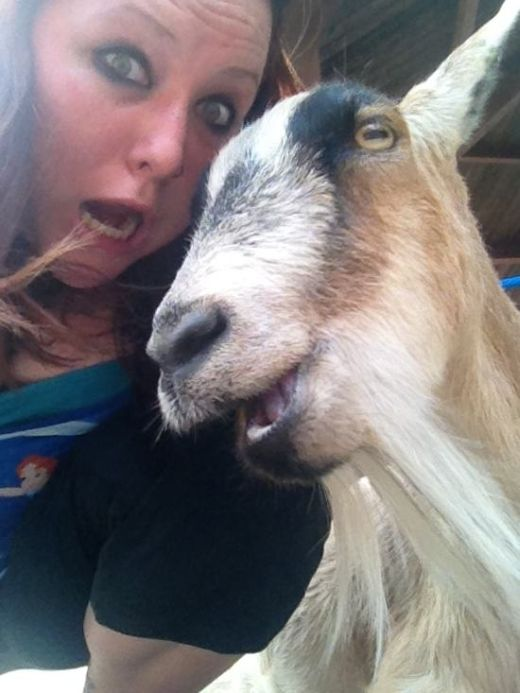 These Animals Just Want To Take A Selfie