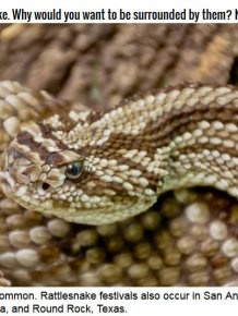 Sweetwater, Texas Loves Rattlesnakes