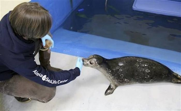 Everyone Is Falling In Love With This Blind Baby Seal