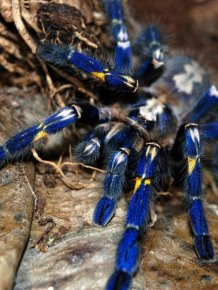 This Spider Is Actually Quite Beautiful