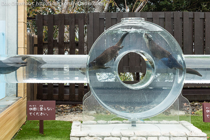 Japanese Zoo Creates Adorable Otter Exhibit