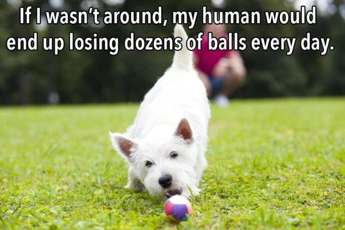 The Truth About What Your Dog Is Thinking