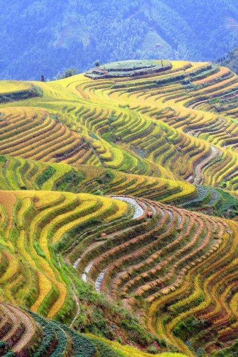 The Amazing Longsheng Rice Terraces
