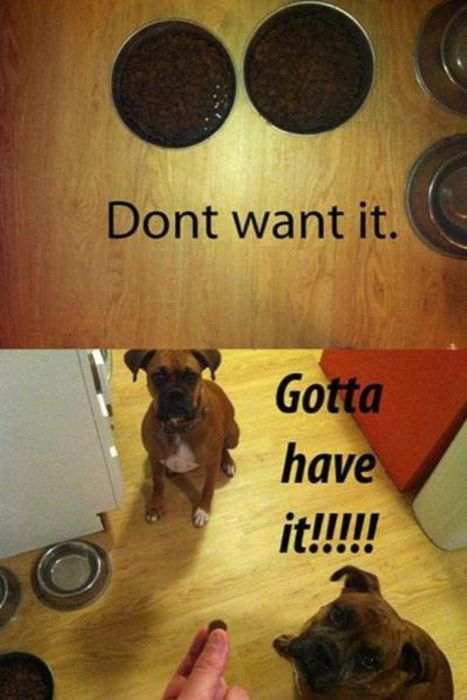 Things That Only Dog Owners Will Be Able To Understand