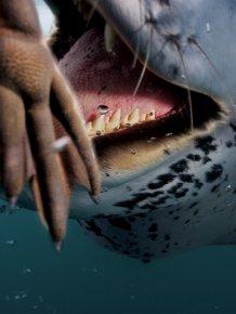 Incredible Wildlife Photos By Paul Nicklen