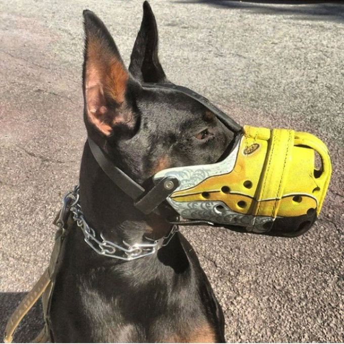 The Most Intimidating Muzzles You Can Buy For Your Dog