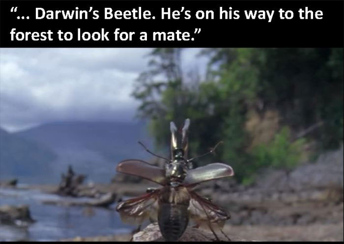 The Beetle Looks For A Mate, A Nature Story
