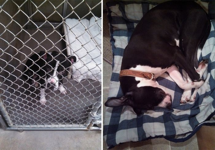 Shelter Animals Before And After They Were Adopted