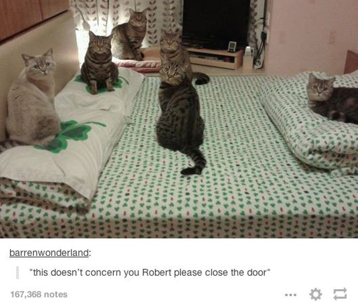 Tumblr Definitely Has The Funniest Posts About Animals