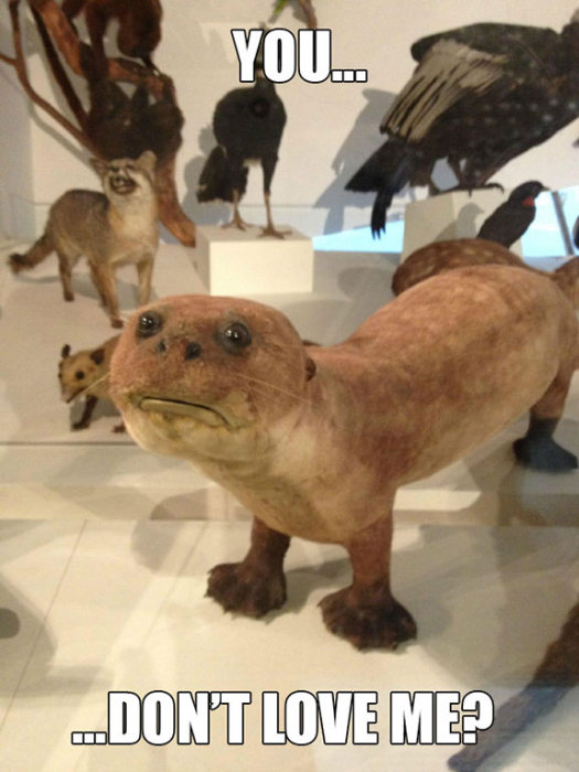What It Looks Like When Taxidermy Goes Horribly Wrong