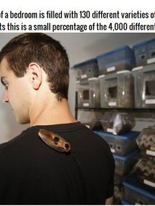 Meet The Man Who Keeps 200,000 Cockroaches In His Bedroom
