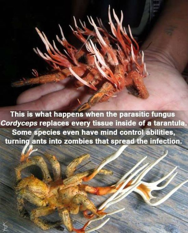 These Are Some Great Reasons To Be Afraid Mother Nature