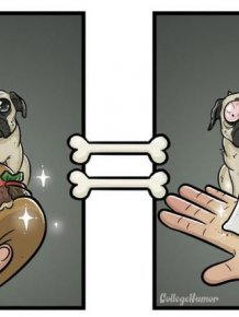 What The World Looks Like Through The Eyes Of A Dog