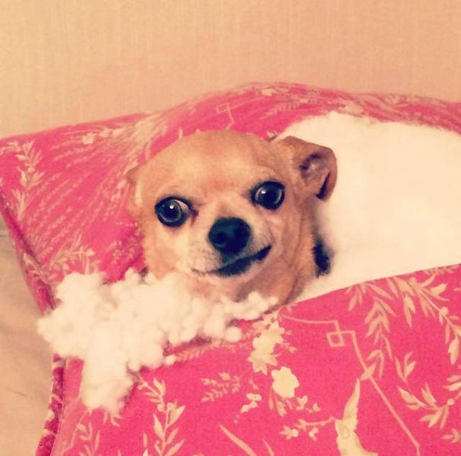 Proof That Dogs Can Be Total Jerks Sometimes