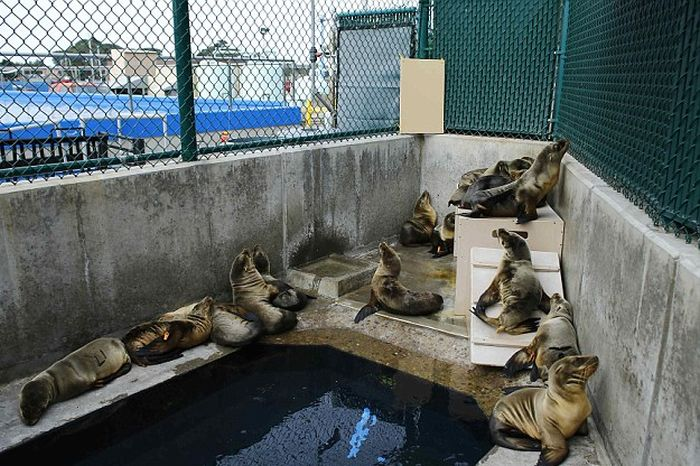 No One Knows What's Causing These Sea Lion Pups To Get Sick