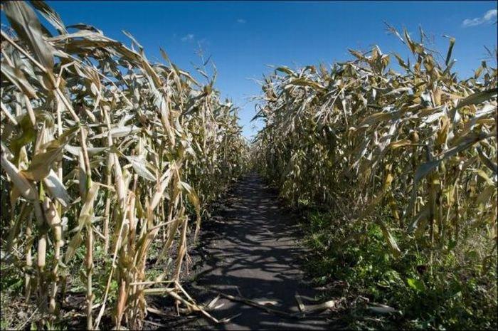 Gigantic Corn Mazes