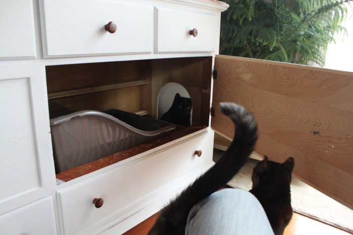 The Perfect Way To Hide Your Cat's Litter Box