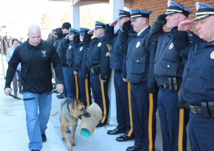 Police Officers Salute Teriminally Ill K9 Cop On His Last Trip To The Vet