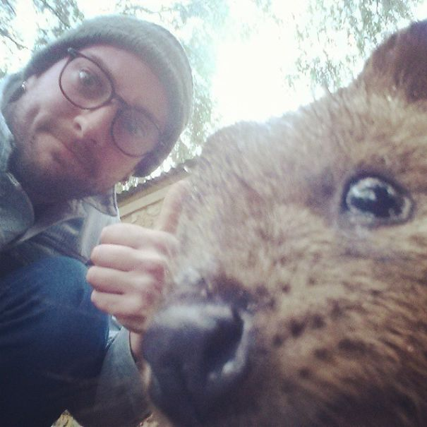 Taking Selfies With Quokkas Is The Cutest Trend In Australia Right Now