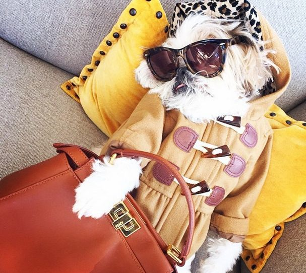 The Rich Dogs Of Instagram Are Straight Up Ballin