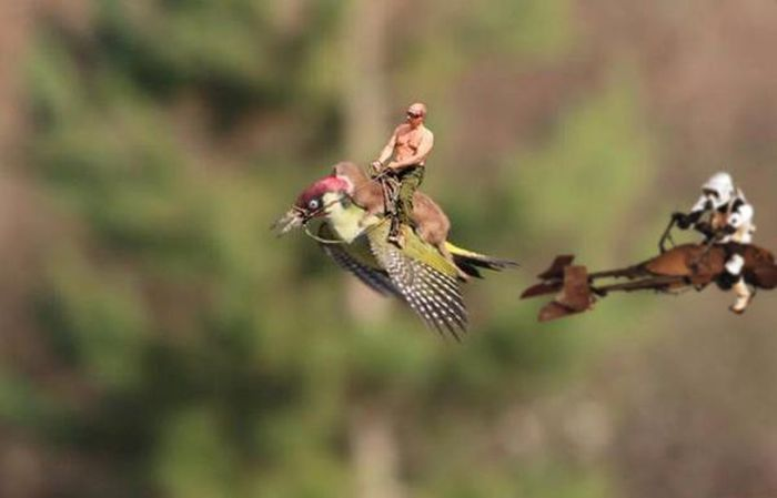 Baby Weasel Hitches A Ride On A Woodpecker's Back