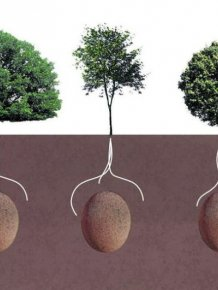 Are These The Burial Pods Of The Future?