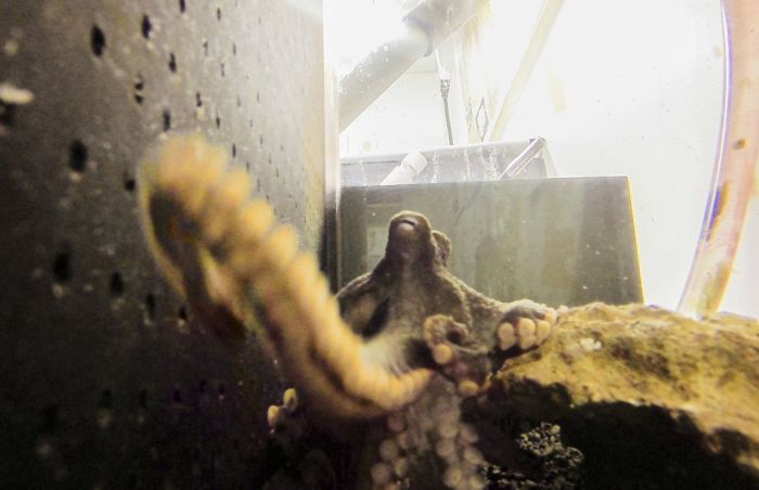 What Happens When An Octopus Steals Your Camera