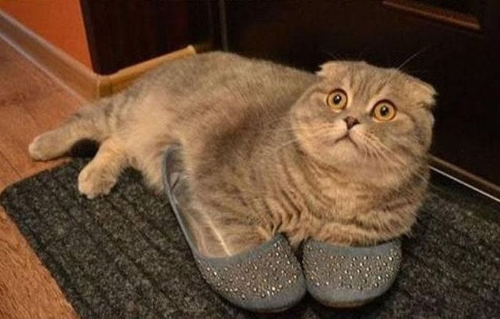 Photos Of Cats Having Way Too Much Fun
