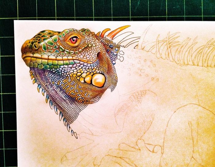 Iguana by Tim Jeffs