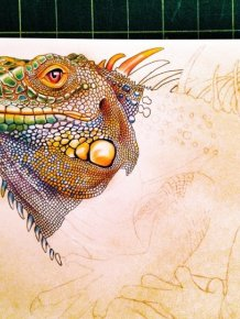 Iguana by Tim Jeffs
