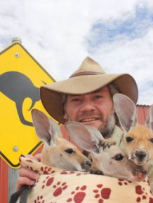 Orphaned Baby Kangaroos Find A Loving Home