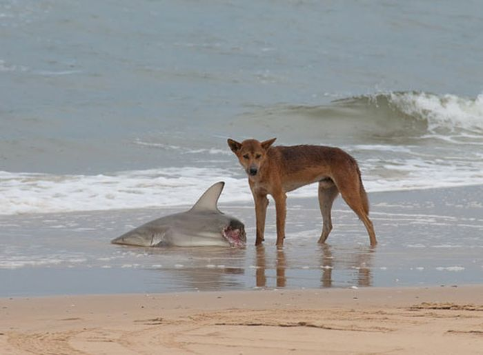 Photos That Prove Australia Is The Most Terrifying Place Ever