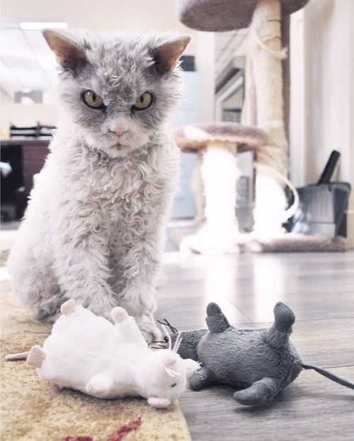 Meet Albert The Feline With A Bitchface That Rivals Grumpy Cat
