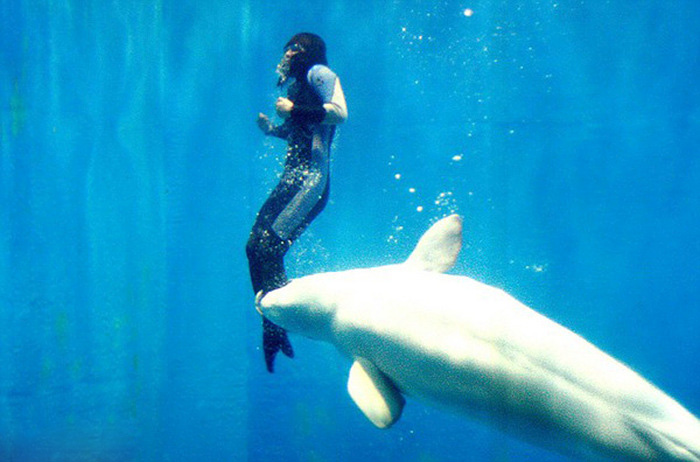 Whale Makes An Amazing Rescue Saving A Temporarily Paralyzed Diver