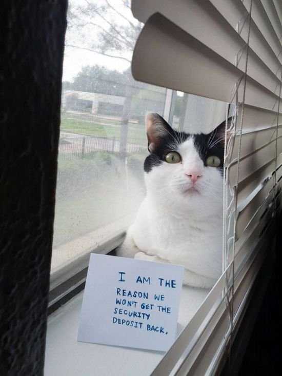 These Cats Totally Deserve To Be Cat Shamed