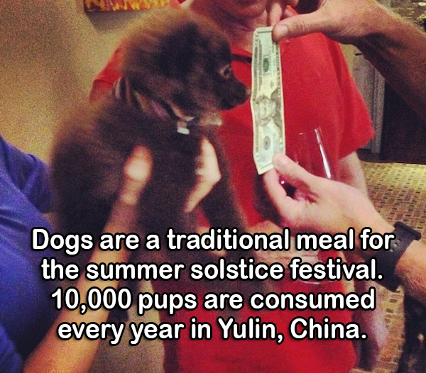 Weird facts about china
