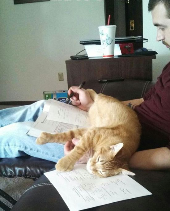 Cats That Just Don't Want Humans To Get Any Reading Done
