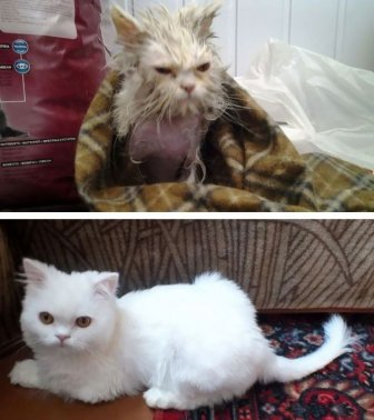 Before And After Photos Show How A Good Home Can Change A Cat